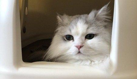 砂が飛び散らない猫トイレおすすめ5選!ガード手作りする動画も紹介