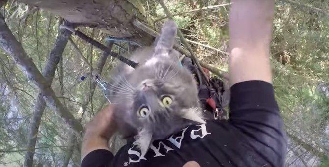 木の上で助けを呼ぶのは…13キロ超えの「大型猫」!?
