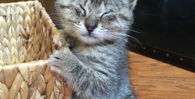 路上に置き去りにされた盲目の子猫は、不安と恐怖に支配されていた…