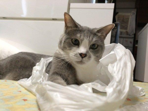 猫がビニール袋を好きなのはなぜ?