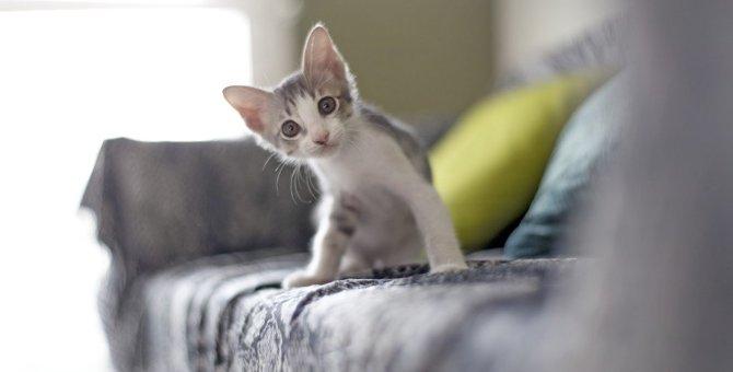 猫に不安を感じさせる『NG環境』5つ