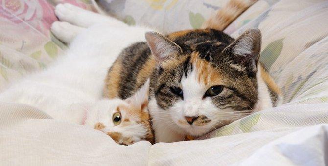 猫の親離れはいつ頃?その時期と注意点について