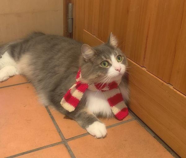 寒い時期に注意したい猫の事故5つ