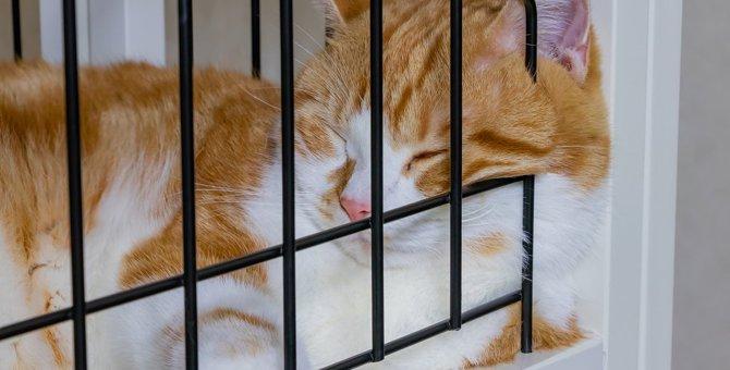 猫の完全ケージ飼いは可能?注意すべき点とおすすめケージ3選