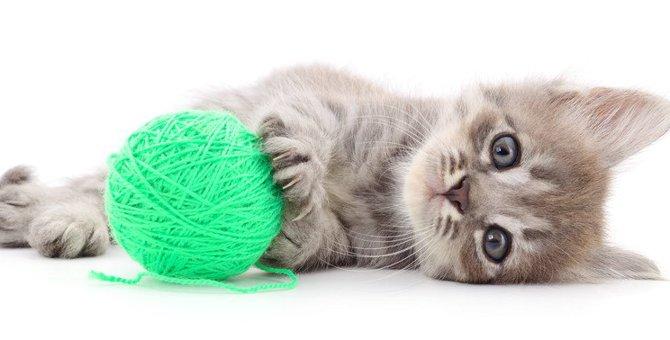 猫が『紐』を誤飲しやすい2つの理由と飲み込みやすい猫種とは?