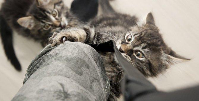 猫が飼い主のズボンで爪とぎするのはなぜ?対策出来る方法とは