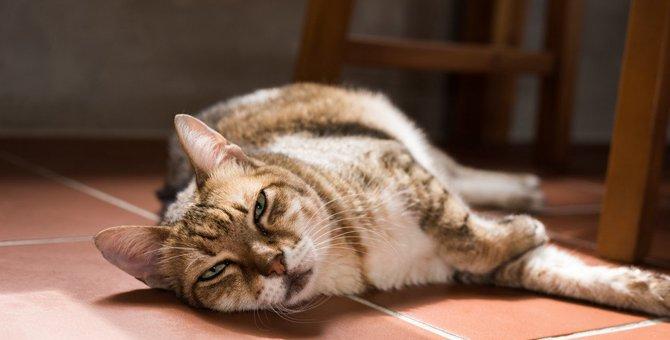 猫がストレスを感じているときの5つの兆候