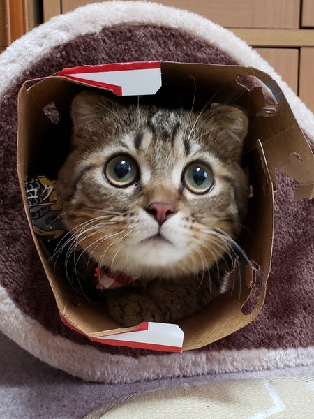 猫は『外見』で人を判断している?
