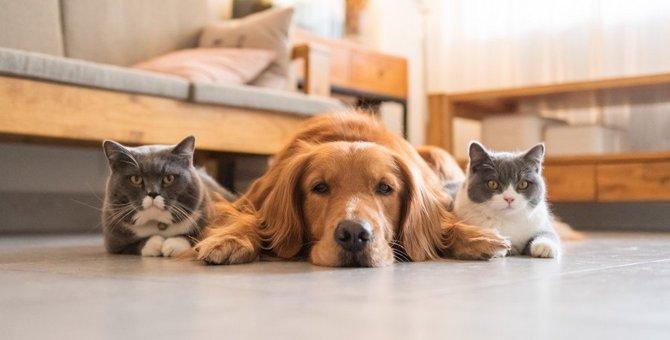 猫と犬は仲良く暮らせる?一緒に生活するために注意すべきこと5つ