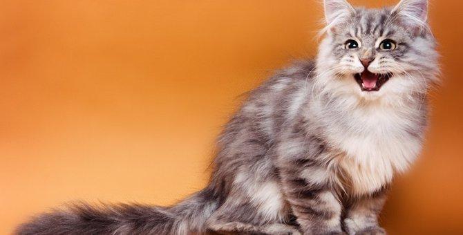 猫のお喋りが止まらない!よく喋る10の理由
