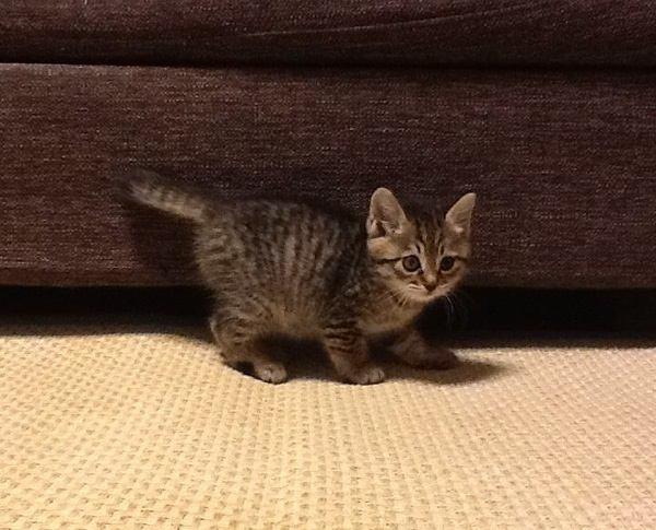 猫のしっぽが色々あるのは遺伝子の違い!愛猫の祖先は?