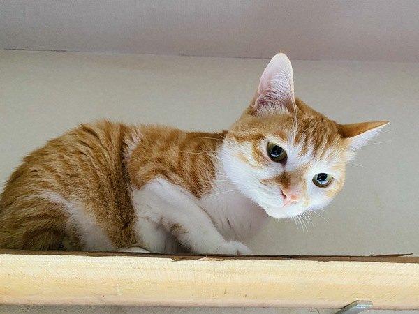 猫が家の中をウロウロする理由3つ