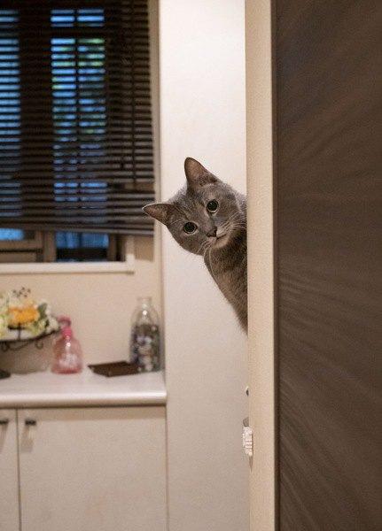 猫が反応しやすい言葉4つ。悪口はバレてるかも?!