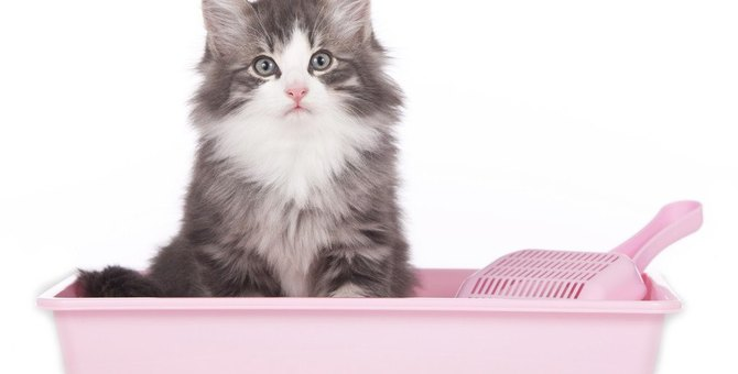 猫トイレで毎日の健康チェック!排泄物の回数・色・量…の合格ラインは?