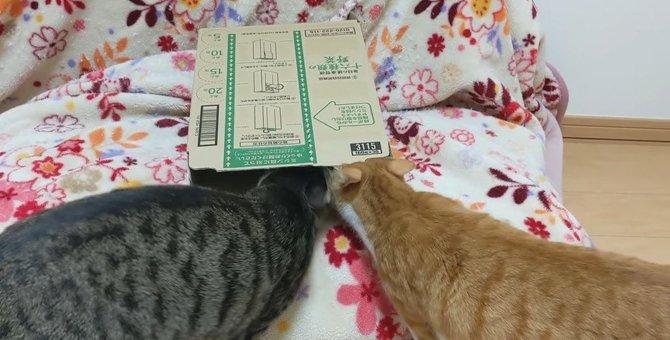 小さめの箱をみた猫ちゃんの突っ込み方とは…