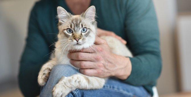 猫のダニは人間にうつる?危険性と対策