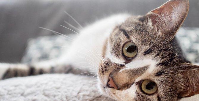 猫飼い初心者が陥る盲点3つ