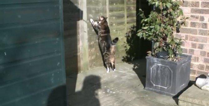 猫のジャンプをスローで…躍動感がすごいっ!