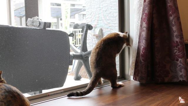 網戸ストッパーVS脱走を試みる猫