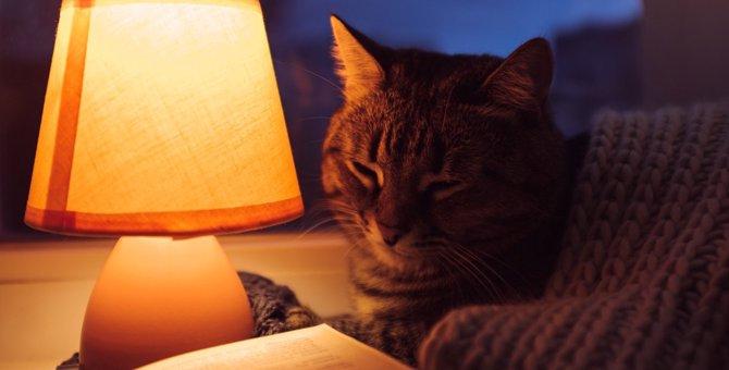 猫が『蛍光灯』を嫌がる2つの理由と対策