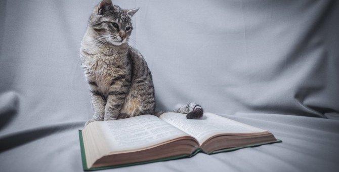 猫が教えてくれている『8つのこと』