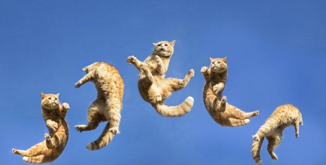 猫が『ジャンプ』に失敗してしまう3つの要因