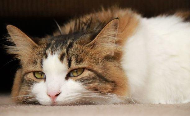 ご機嫌ナナメな猫のご機嫌を直す方法5つ