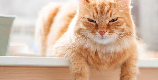 猫が『モヤモヤ』しているときに見せる仕草5つ