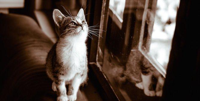 猫の世界はセピア色…実はこんな風に見えている!