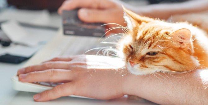 猫の飼い主が『買ってはいけない物』3選