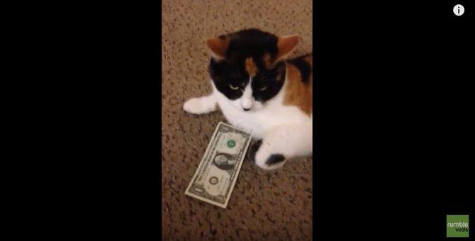 「このお金は私の物だニャ!」お金を取られたくない猫さん