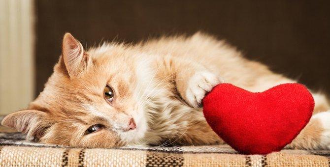 猫が飼い主の前で寝っ転がる8つの心理