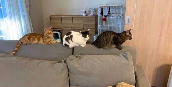 奇跡の1枚!3にゃんずの『猫行列』がかわいいと話題に♡