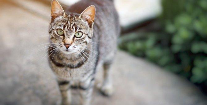 【要注意】猫が警戒中!の時に出すサイン5つ