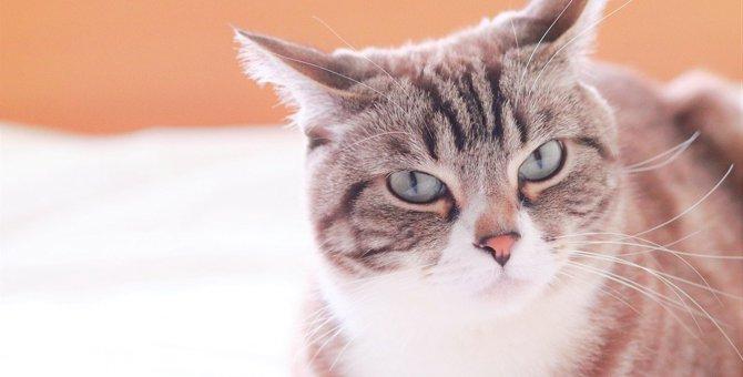 猫が『不快感』を抱いているときの仕草3つ