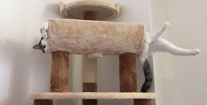 猫が飛び乗っても大丈夫!おすすめ据え置き肉球キャットタワー