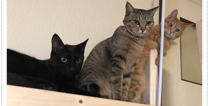 簡単DIY♡キャットウォークにもなる猫様のためのテレビ台