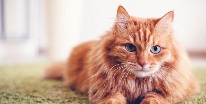 猫のにおいが少ない理由、臭い時の原因や対処法