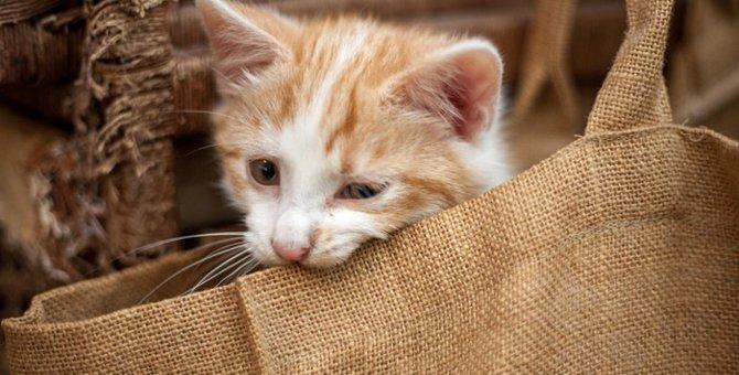 保護猫との出会い〜やんちゃ娘がわが家にやって来た