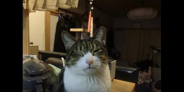 玉ねぎが目に沁みて涙目な猫・・・でも見てるとなんだか可愛い(笑)(movie)