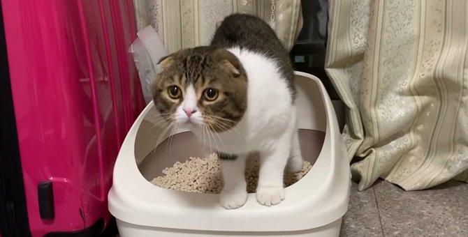 トイレの後はハイテンションで猛ダッシュする猫さん!