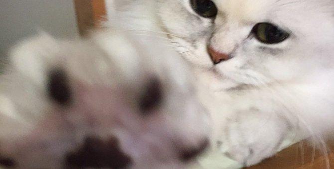 ただのぷにぷにじゃないよ!猫の肉球の秘密5選