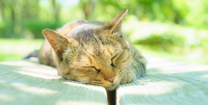猫の老化を早める8つのNGな飼い方