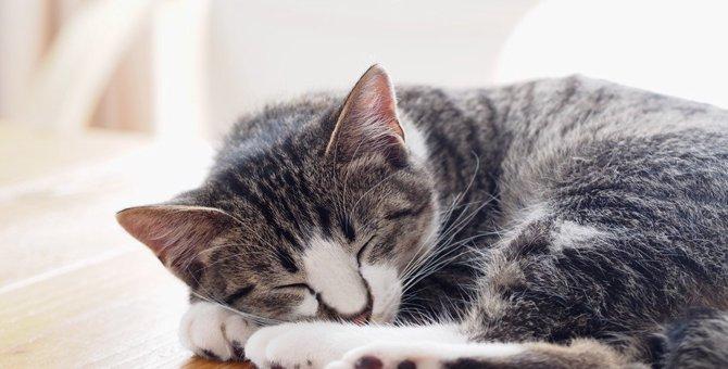 猫に虫が寄生している時の症状や対処法、予防の方法
