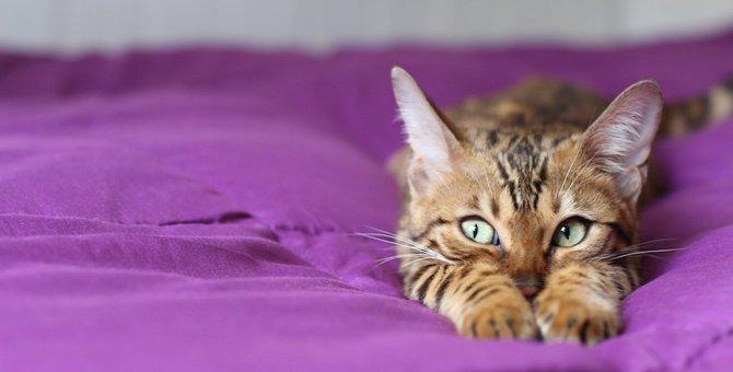 猫がどいてくれないのはどうして?4つの心理