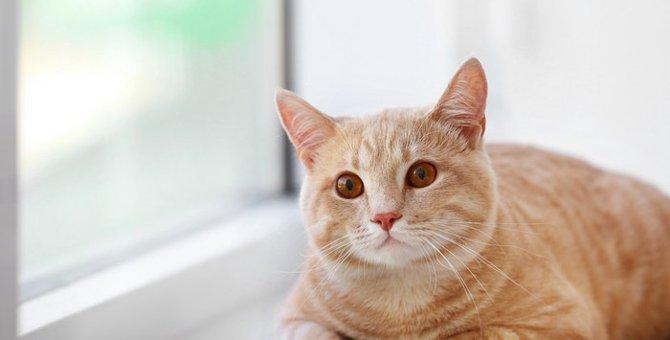 猫が嘔吐する理由と注意点について