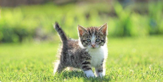 母猫が子猫を食べるのはなぜ?5つの理由や阻止する方法
