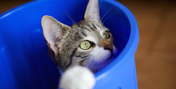 飼い猫がゴミ箱を荒らすときの対処法5つ