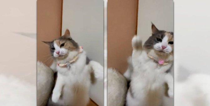 「右パンチ!左パーンチ!」強烈な猫パンチにのけぞる人続出