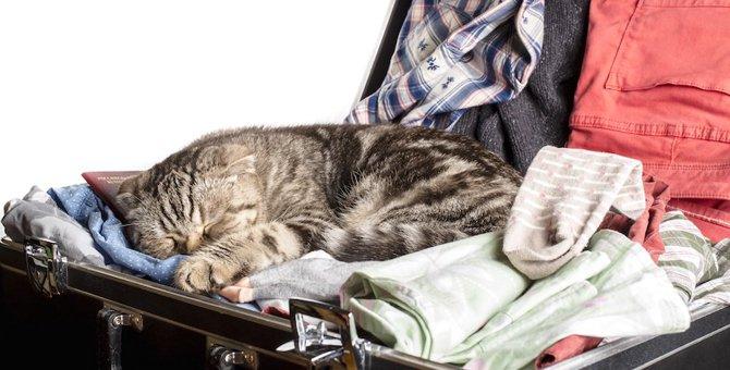 猫を海外に連れて行くためには何が必要?出国時の手続きや予防接種など